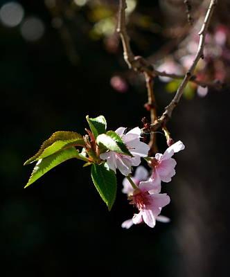 Photograph - Springtime In Napa Ca by Dean Ferreira