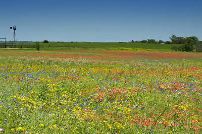 Photograph - Springtime In Texas 2 by Stephen Anderson