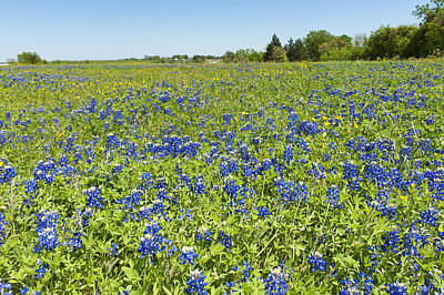Photograph - Springtime In Texas 4 by Stephen Anderson