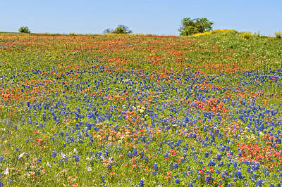 Photograph - Springtime In Texas 5 by Stephen Anderson