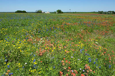 Photograph - Springtime In Texas 6 by Stephen Anderson