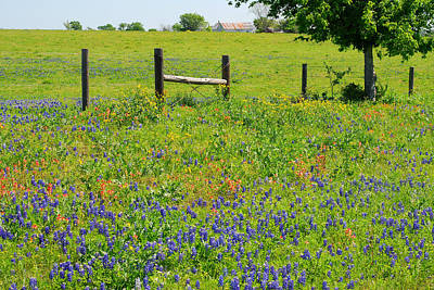 Photograph - Springtime In Texas by Connie Fox