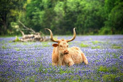 Springtime In Texas Art Print