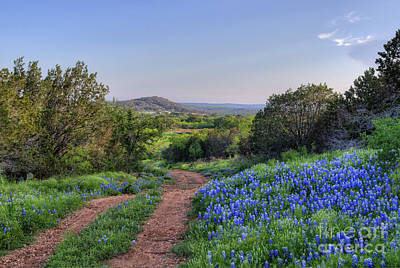 Springtime In The Hill Country Art Print by Cathy Alba