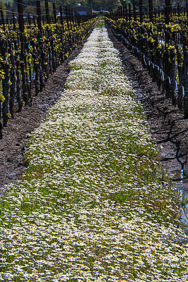 Springtime In The Vineyards Art Print by Garry Gay