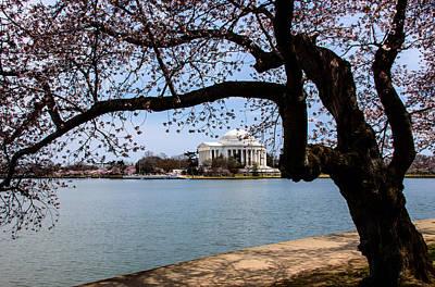 Photograph - Springtime In Washington by Kathi Isserman