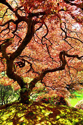 Photograph - Springtime Japanese Maple Tree by Athena Mckinzie
