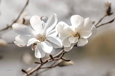 Photograph - Springtime Magnolia Bloom by Julie Palencia
