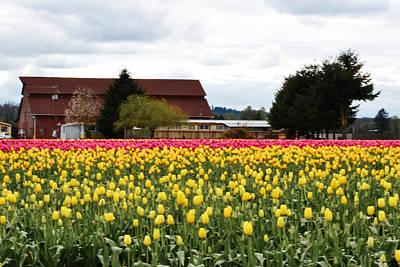 Photograph - Springtime On The Farm by Ansel Price