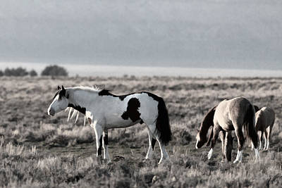 Photograph - Springtime On The Steens by Wes and Dotty Weber