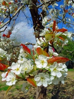 Photograph - Springtime Pear Blossoms - Hello Spring by Rebecca Korpita