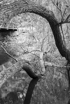 Photograph - Springtime Pond With Turtles Greyscale by MM Anderson