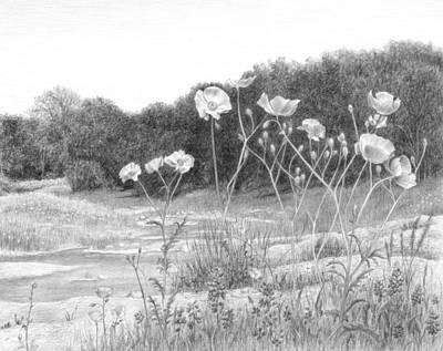 Poppies Drawing - Springtime Poppies by Diane Cardaci