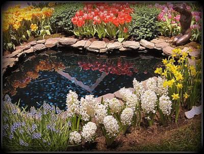 Springtime Reflections Original by Dora Sofia Caputo Photographic Art and Design