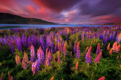 New Zealand Photograph - Springtime Rush by Patrick Marson Ong