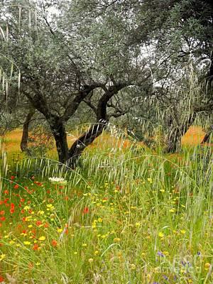 Photograph - Springtime Sicily by Pauline Margarone