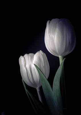 Photograph - Springtime White Tulips by Julie Palencia