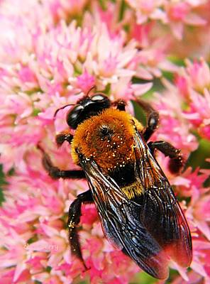 Photograph - Sprinkled With Pollen by Chris Berry