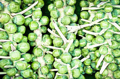 Sprouts Art Print by Tom Gowanlock