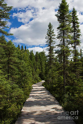Photograph - Spruce Bog Boardwalk by Barbara McMahon