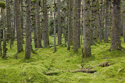 Spruce Forest & Moss Near Coast Kodiak Art Print by Kevin Smith