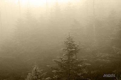 Photograph - Spruce In Clouds by Andy Crawford