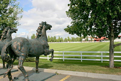 Photograph - Spruce Meadows by Betty-Anne McDonald