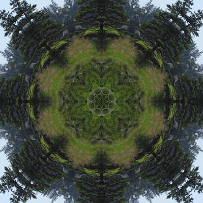 Digital Art - Spruce Tree Twins by Trina Stephenson