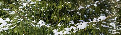 Whimsical Flowers - Spuce tree covered with snow - Featured 2 by Alexander Senin