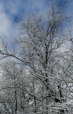 Photograph - Spun Sugar Trees Made By Nemo by Deborah Smolinske
