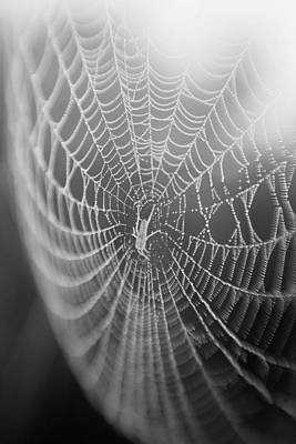 Photograph - Spyder Web by Matthew Pace
