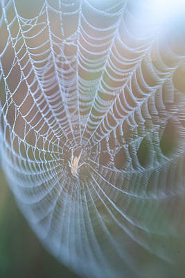 Photograph - Spyder's Web by Matthew Pace
