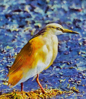 Wildlife Landscape Painting - Squacco Heron by George Rossidis