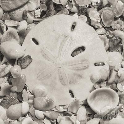 Square Sepia Sand Dollar Art Print by Birgit Tyrrell