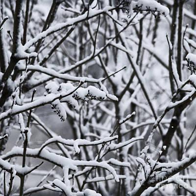 Square Snowy Branches Art Print by Birgit Tyrrell
