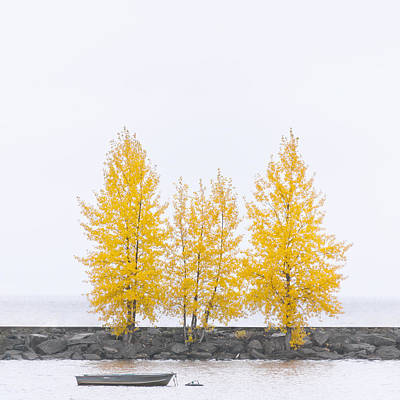 Photograph - Square Tree by U Schade