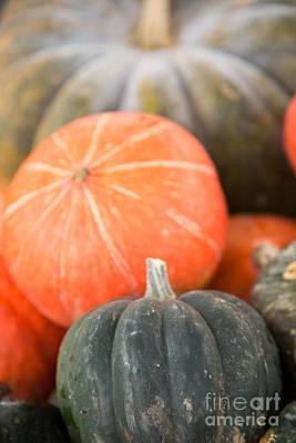 Photograph - Squash And Pumpkin by Rebecca Cozart