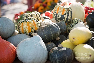 Photograph - Squash Group by Rebecca Cozart