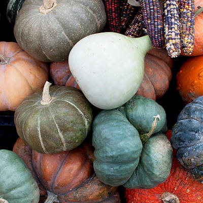 Pumpkin Photograph - Squash Medley by Elizabeth Gray