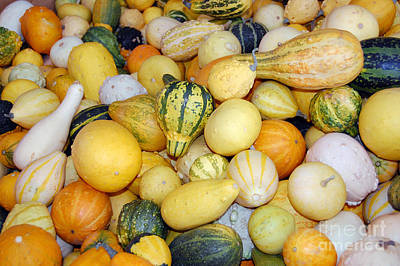 Photograph - Squash Variety by Debra Thompson