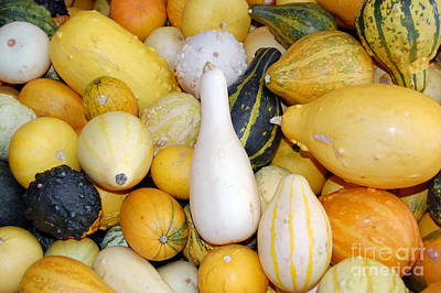 Photograph - Squash Variety Up Close by Debra Thompson