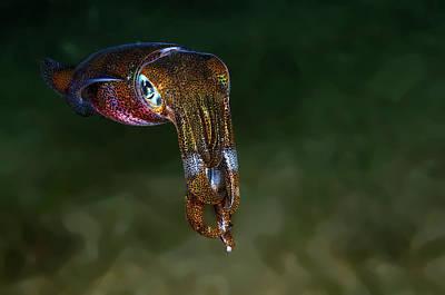 Philippines Photograph - Squid by Ilan Ben Tov