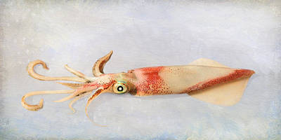 Photograph - Squid by Karen Lynch