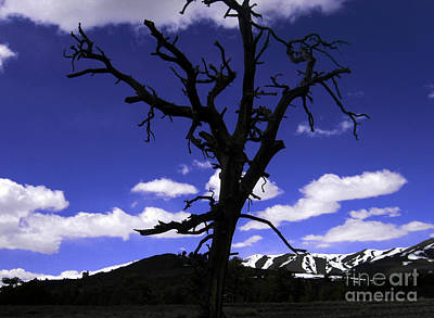 Art Print featuring the photograph Squigly Tree by Janice Westerberg