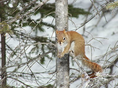 Photograph - Squirrel 4 by Gene Cyr