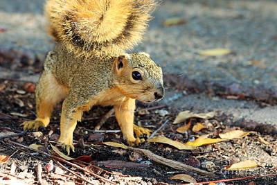 Photograph - Squirrel by Afrodita Ellerman