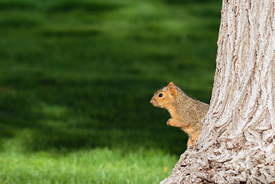 Photograph - Squirrel And A Tree by Christy Patino