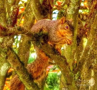 Photograph - Squirrel Away Acorn by Susan Garren