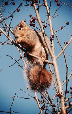 Photograph - Squirrel Berry by Susan Garren