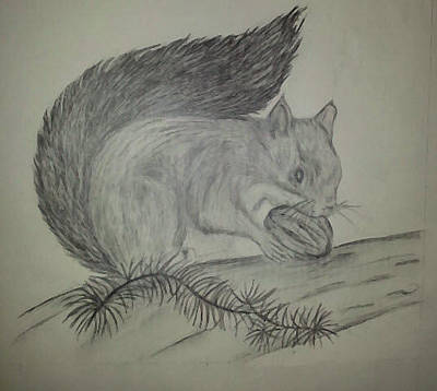 Drawing - Squirrel by Cheryl McKeeth